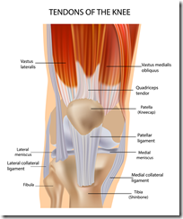 Knee-muscle-and-tendon-injuries